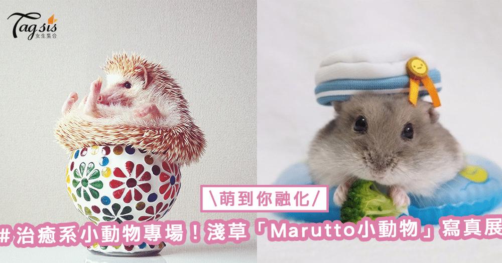 浅草「marutto小动物」写真展,萌照