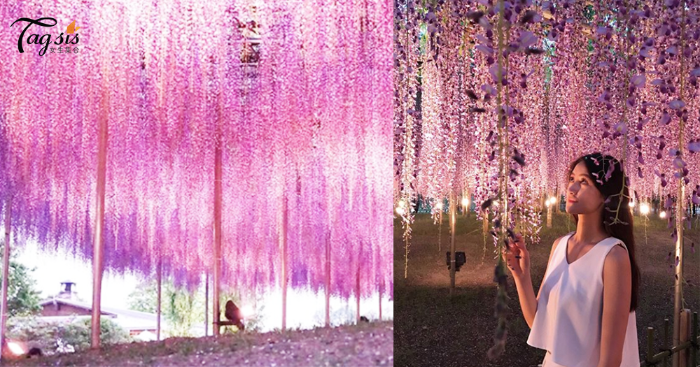 日本女生必到「東京紫藤花公園」,不同顏色的紫藤花超吸睛!絕對是仙境啊~