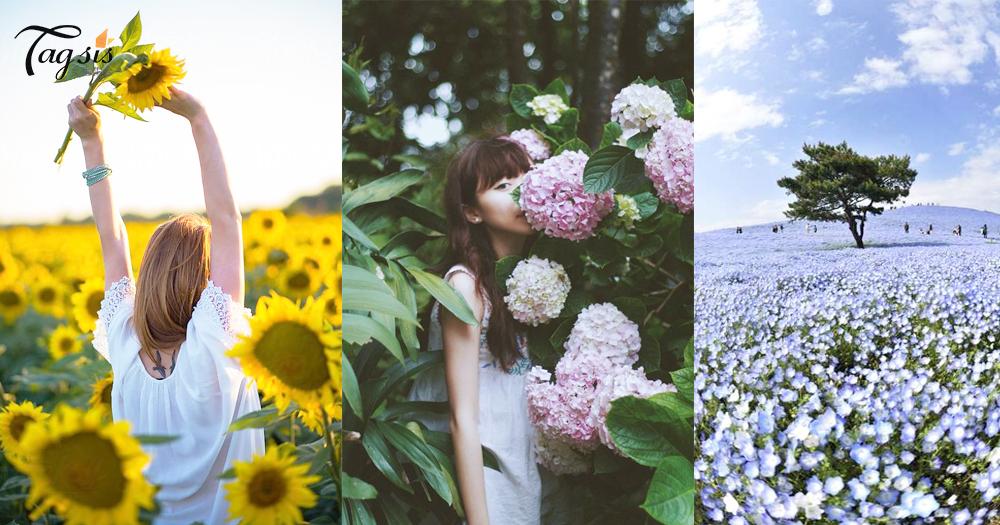 【賞花懶人包】2018日本粉蝶花、繡球花、向日葵花期預測出爐!